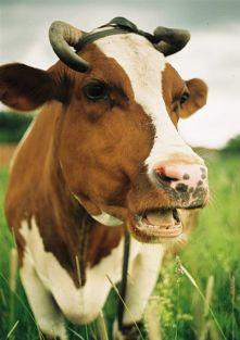Бизнес план животноводства скотоводства фермы по разведению крс  Бизнес план животноводства